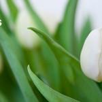 So riecht der Frühling auf der Haut (inkl. Gewinnspiel)